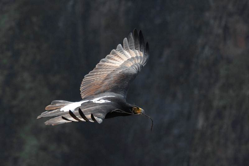 exceptional birding at Gorges