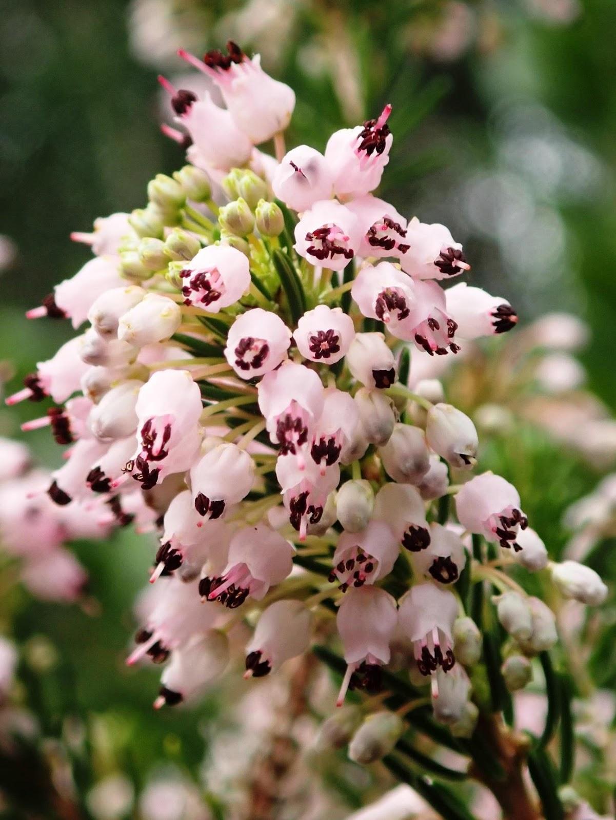 C:\Users\User\Pictures\Tardor a Alcanada\04 11 2020\flor de xiprell m.jpg