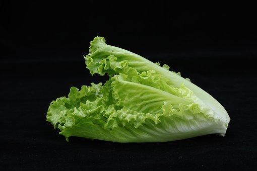 Vegetable, Lettuce, Romaine Lettuce