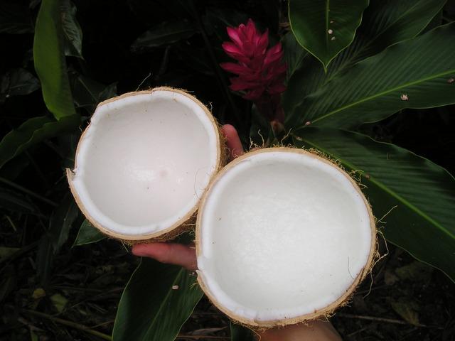 Noce Di Cocco, Natura, Samoa, Esotici, South Sea. Google+ Follow us