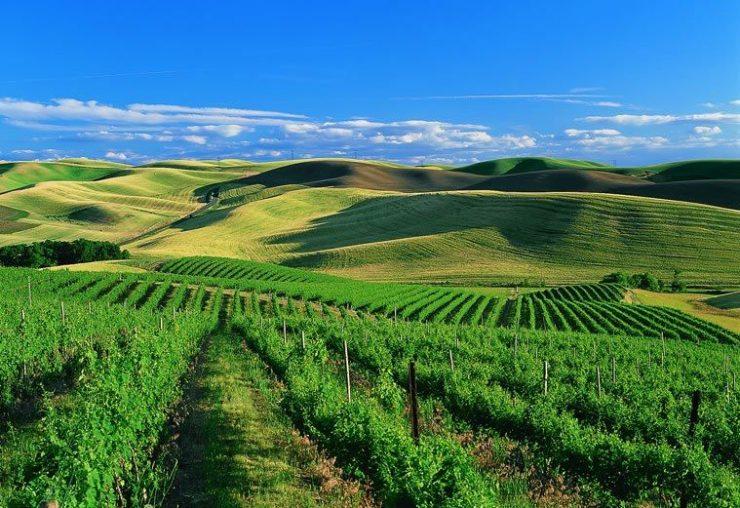 Image result for Walla Walla Valley, Washington