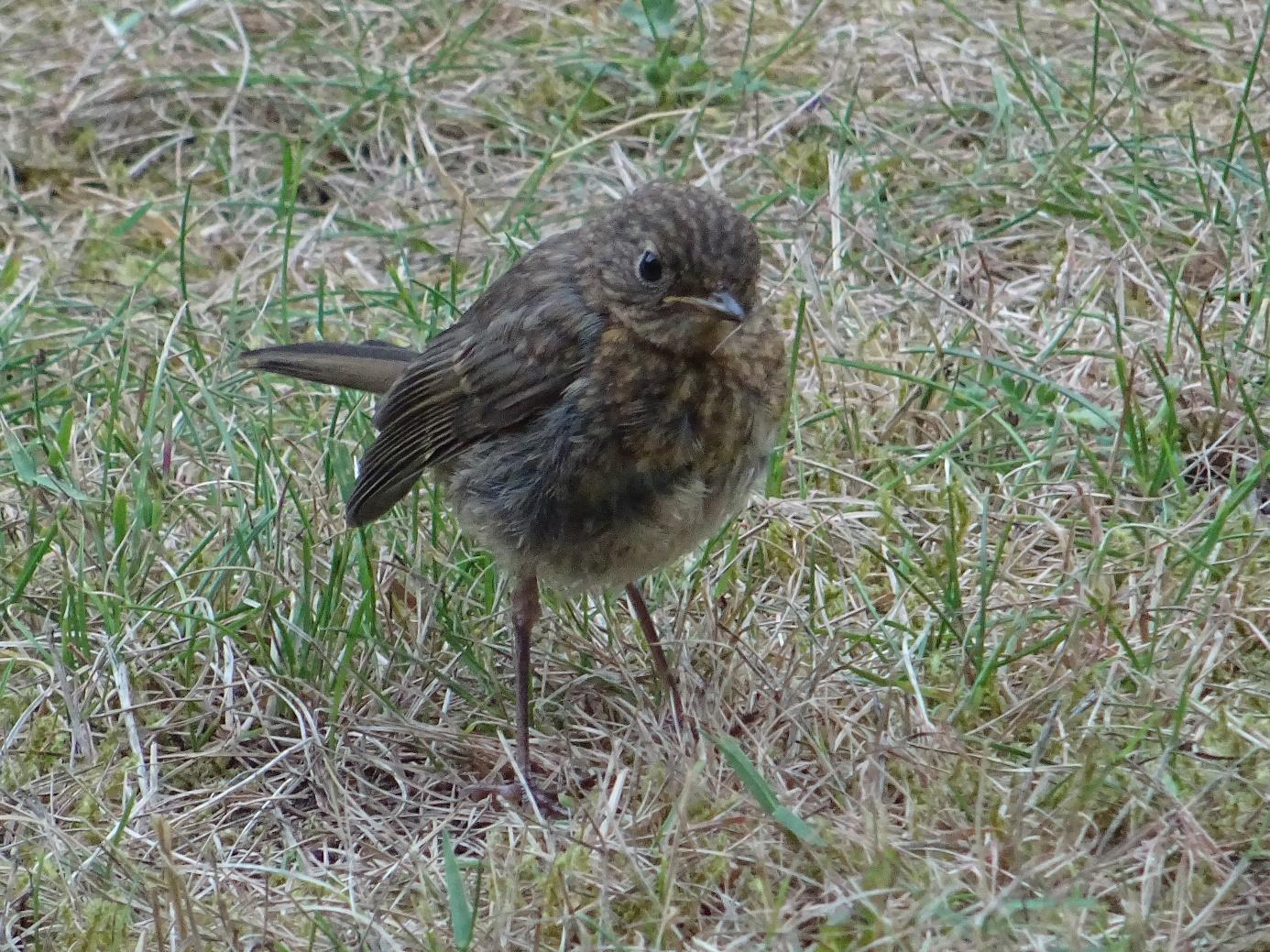 Afbeelding met gras, buiten, vogel, staand  Automatisch gegenereerde beschrijving