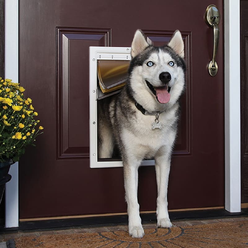 husky and dog door