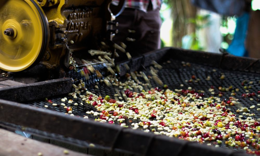 washed coffee processing