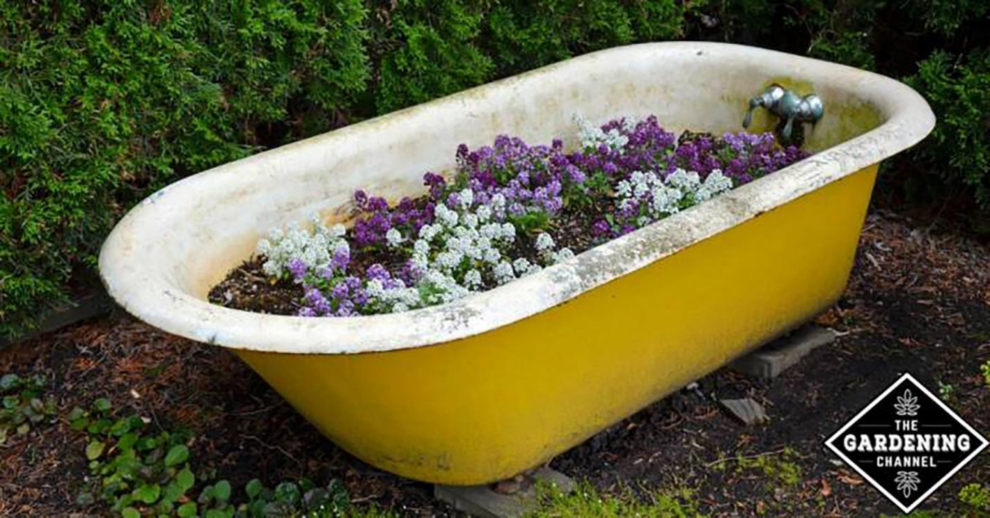 Old bathtub repurposed to be a landscape feature.