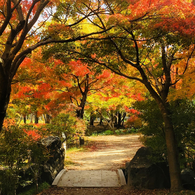 alt: Autumn in Kyoto, Umekoji park