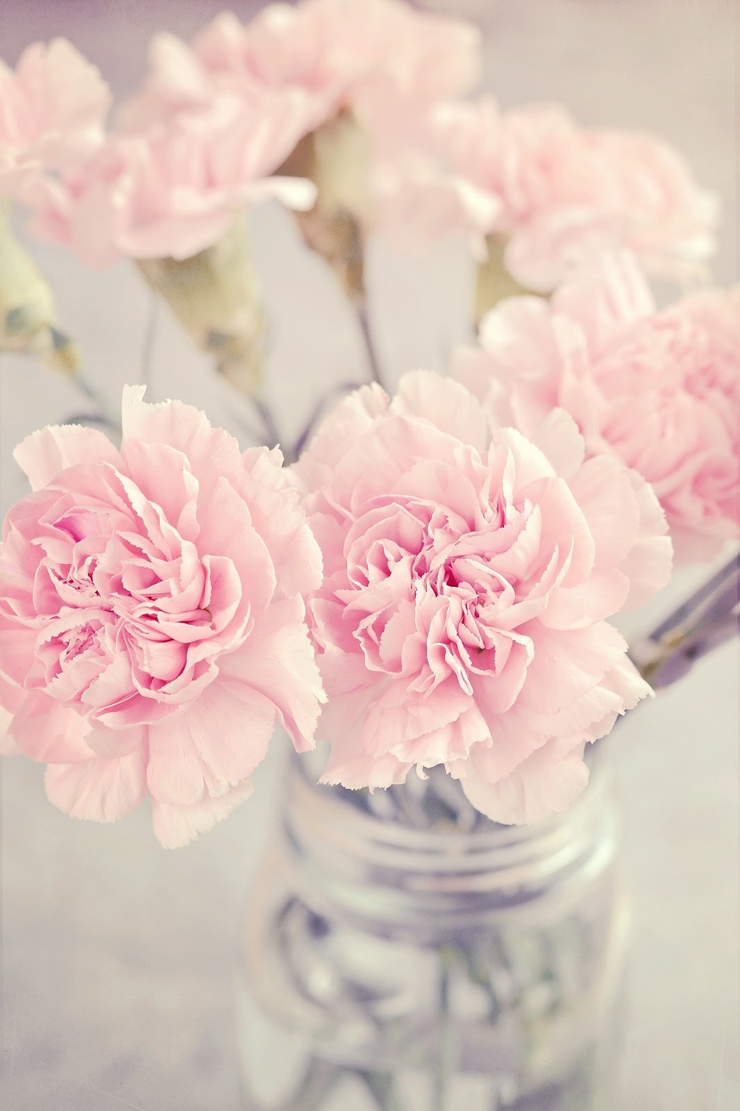Mothers Day Carnations Colours Meanings Fresh Flowers Blog