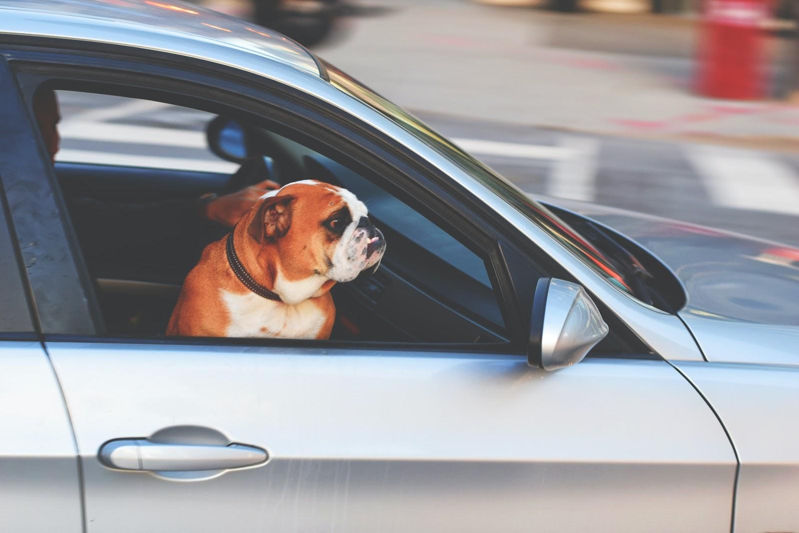 Um cachorro olhando a rua pela janela de um carro.
