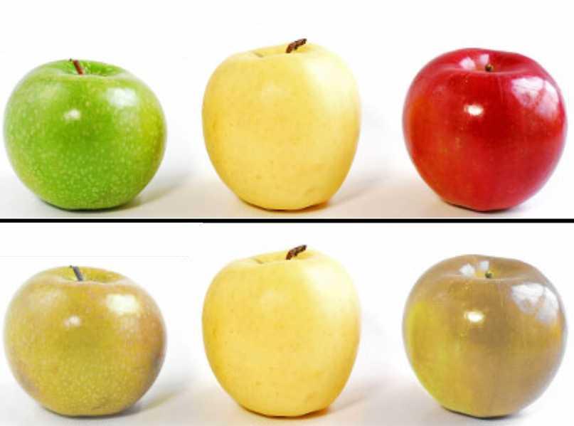 Bệnh mù màu thường không phân biệt được một vài màu sắc