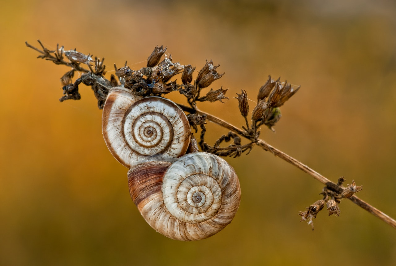 Fibonnacci spiral seen in nature.