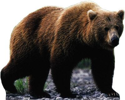 grizzly-bear[1]