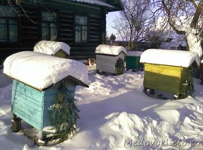 Зимовка пчёл на воле.