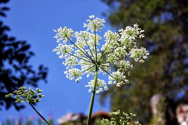 Wildflowers in Nendaz Switzerland