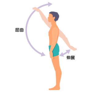 肩の可動域 屈曲と伸展