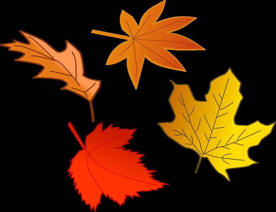 Leaf Autumn   Free Stock Photo   Illustration of colorful autumn ...