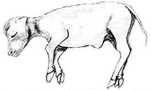 Día 80: El tamaño del feto es de aproximadamente 9.50 cm.