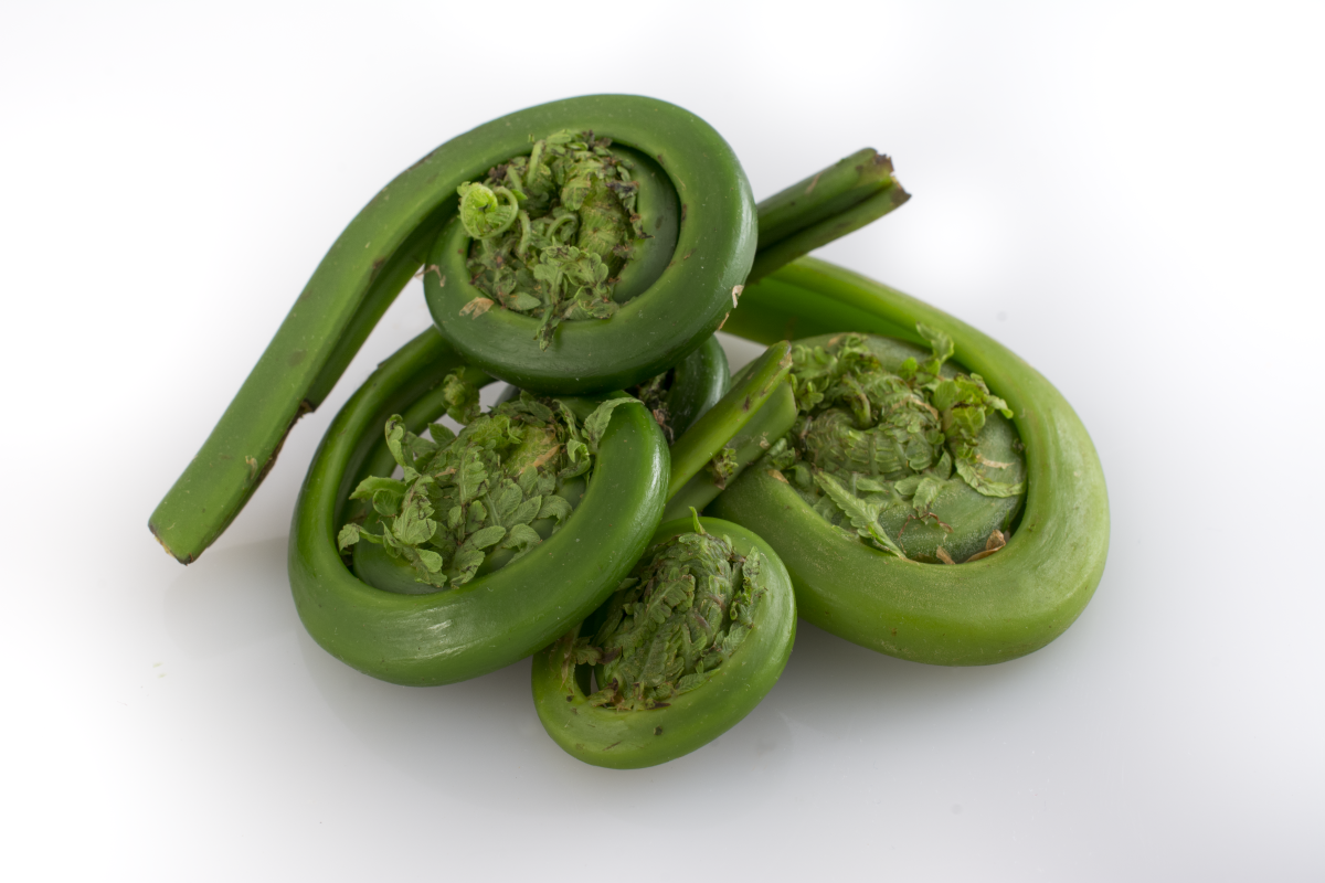 Fiddlehead fern - Wikipedia