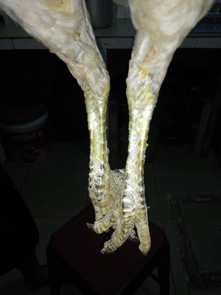 Phòng bệnh khô chân gà