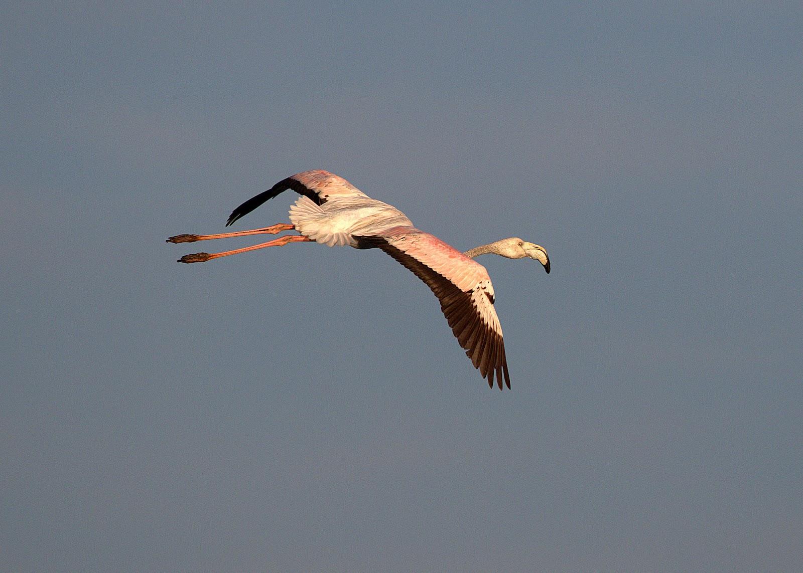 flamingo2_rsz.jpg