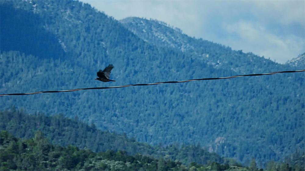 Passing Crow.jpg