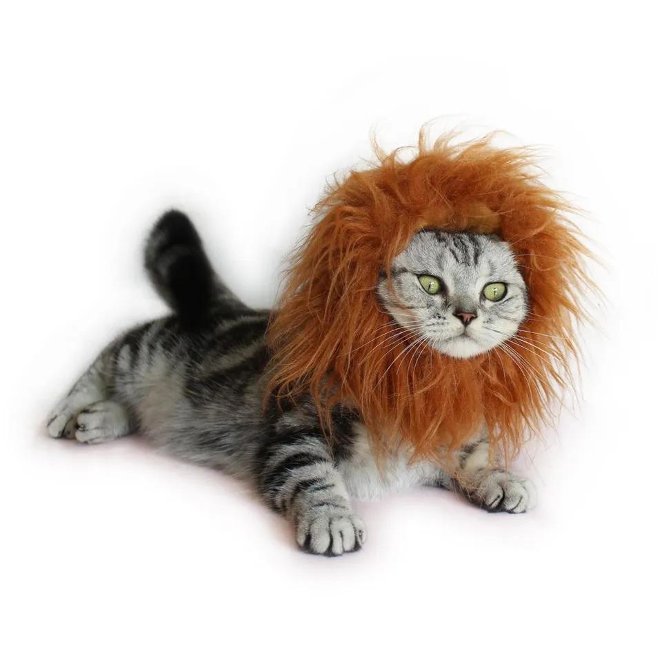 lion cat halloween costume
