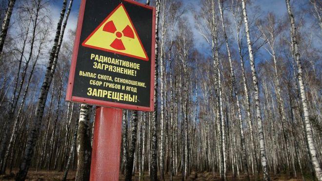 Огромные участки земли на территории Украины и Беларуси остаются непригодными для проживания из-за радиоактивного заражения, но растительная жизнь здесь - куда пышней, чем раньше