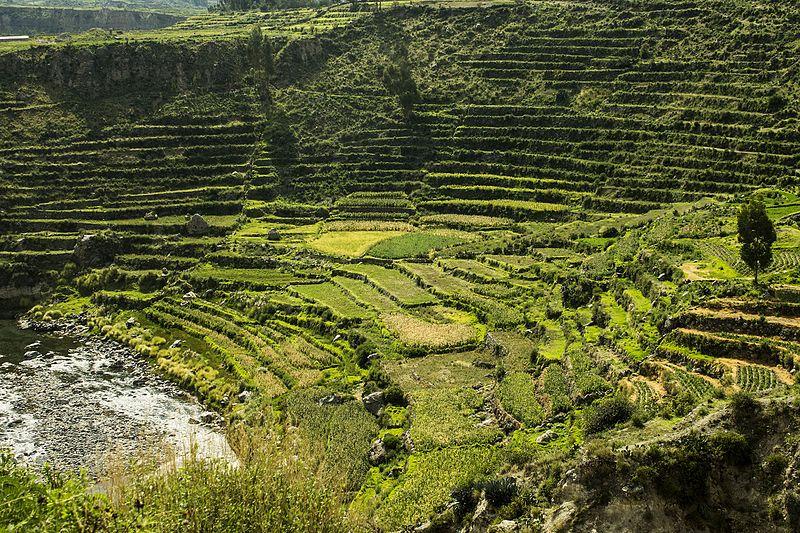 Andenes en Cusco