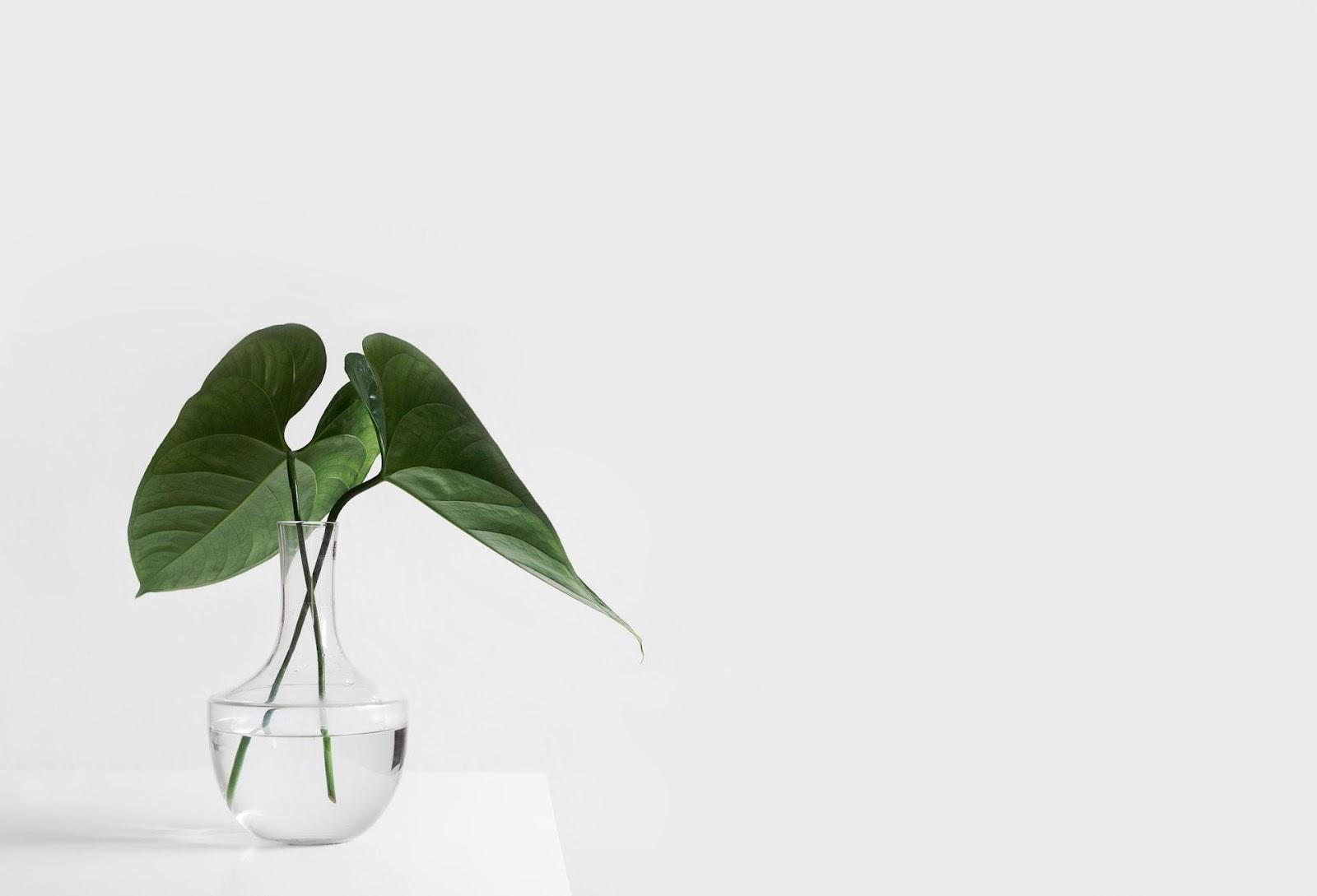 Vida frugal e minimalista: O que é frugalidade e como ela está relacionada ao minimalismo