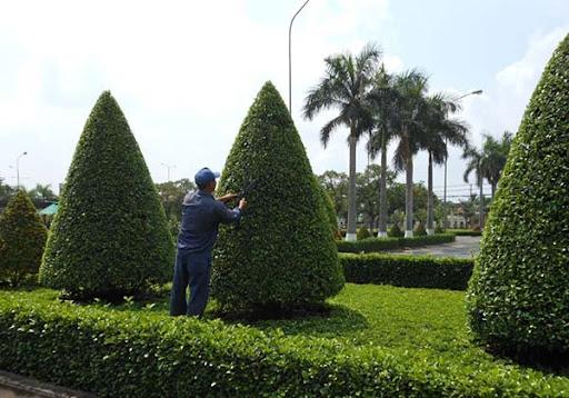 Chăm sóc cây để cây phát triển đúng và tốt hơn