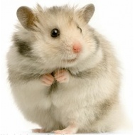 hamster-gerbil-food.jpg