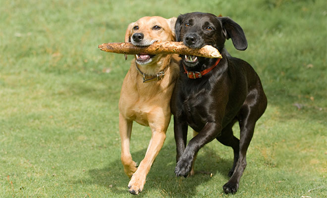 dogs playing.jpg