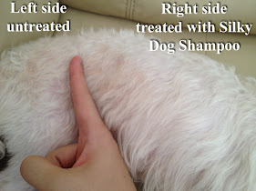 Difference between treated and not treated with silky dog shampoo.