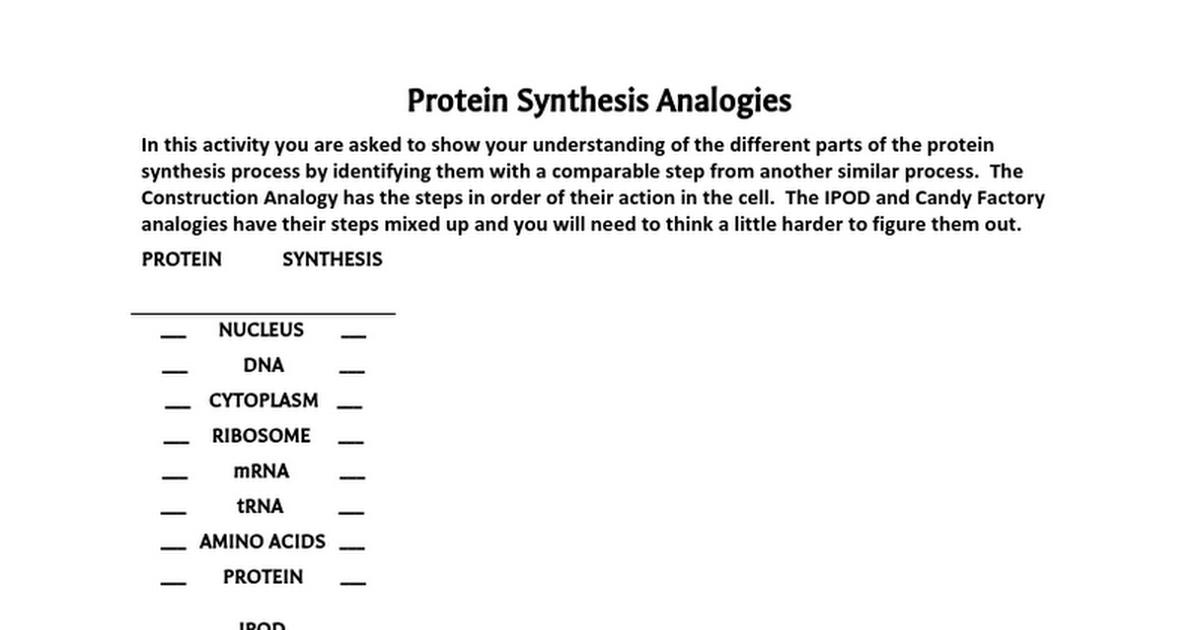 Protein synthesis analogies google docs malvernweather Gallery