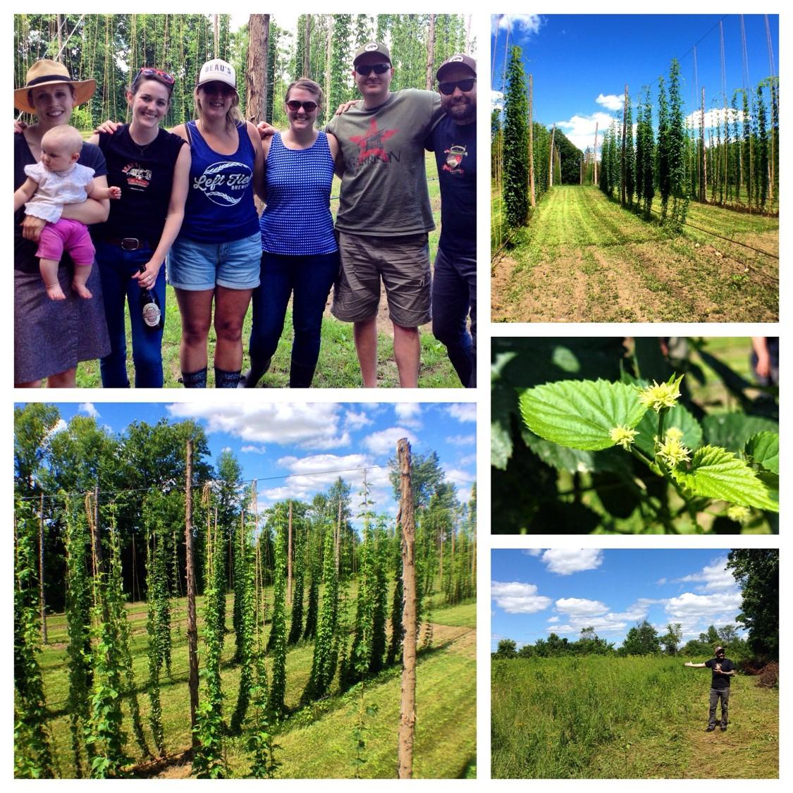 A photo collage of the hop farm at Old 4th including images of the vines, close up of the hop cones, and a group shot of six folks from Beau's visiting the farm.