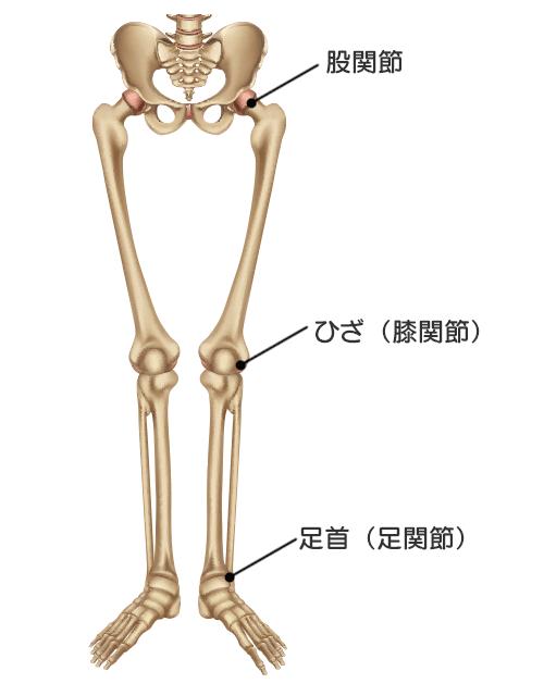 下肢の三大関節