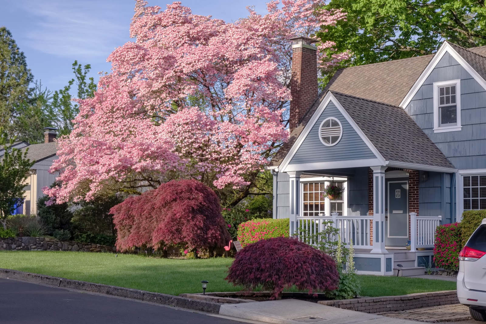 Spring curb appeal featuring a blue gray cottage style house with white trim and an yard filled with cherry blossoms and spring color.