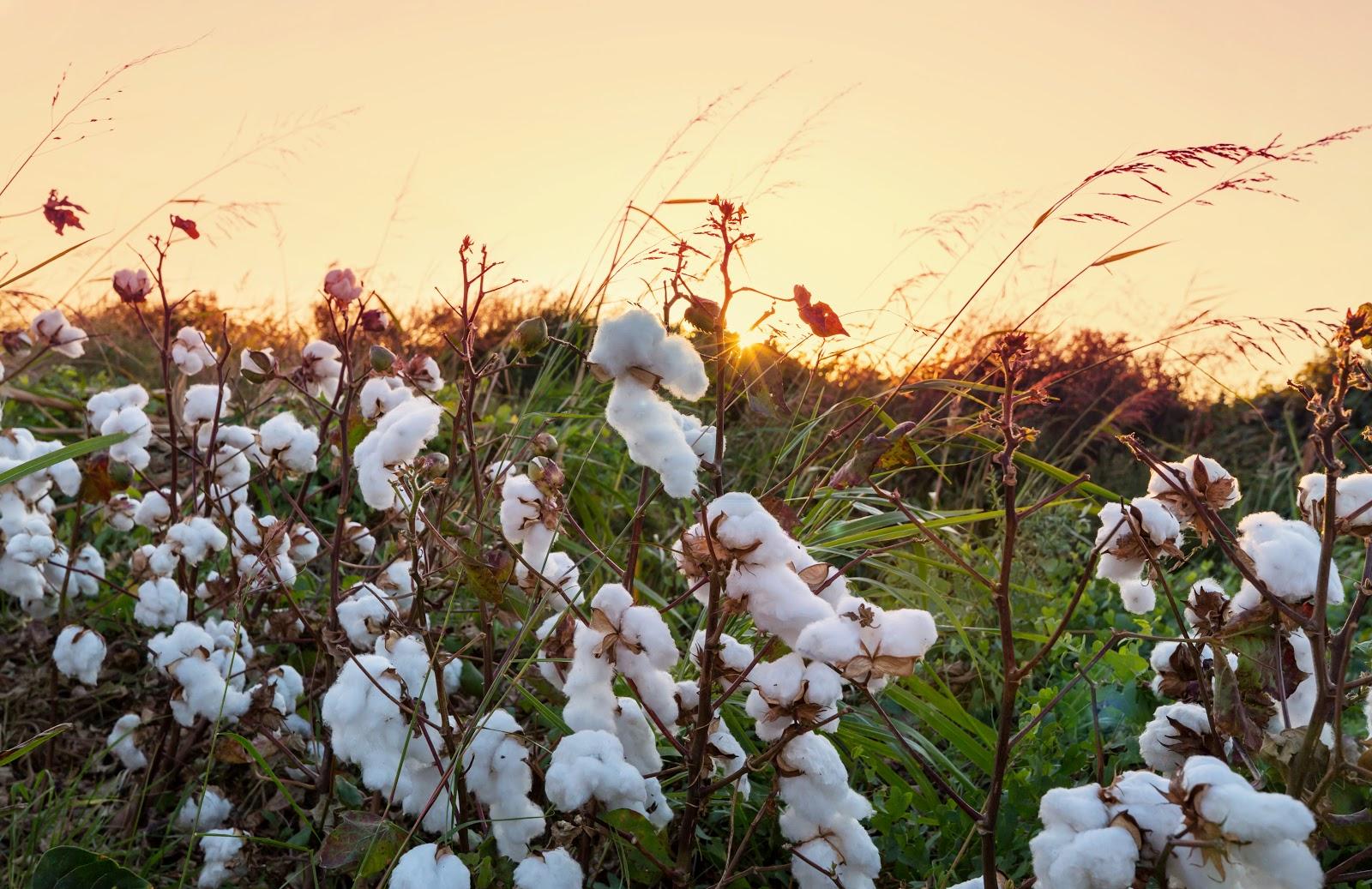Creare vestiti da fibre organiche