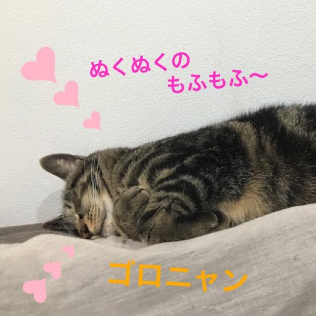 寒い冬を快適に過ごすための猫の冬用暖かいベッド特集