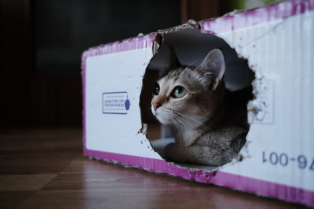 cat in house