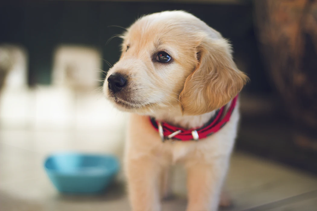 Can dogs sense depression? (A Comprehensive Guide)
