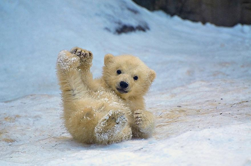 Image result for cute polar bear