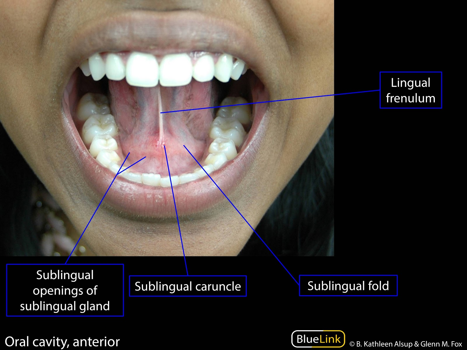 S7 Oral Cavity - Learning Objectives - BlueLink