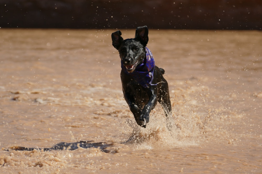 dog running on flooded land