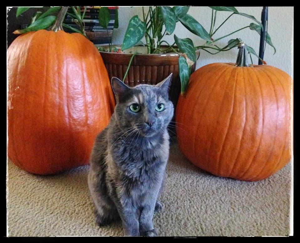 Cat with pumpkins