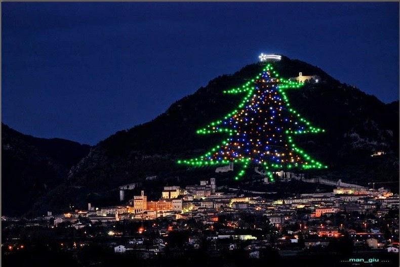 Gubbio a világ első legnagyobb fája