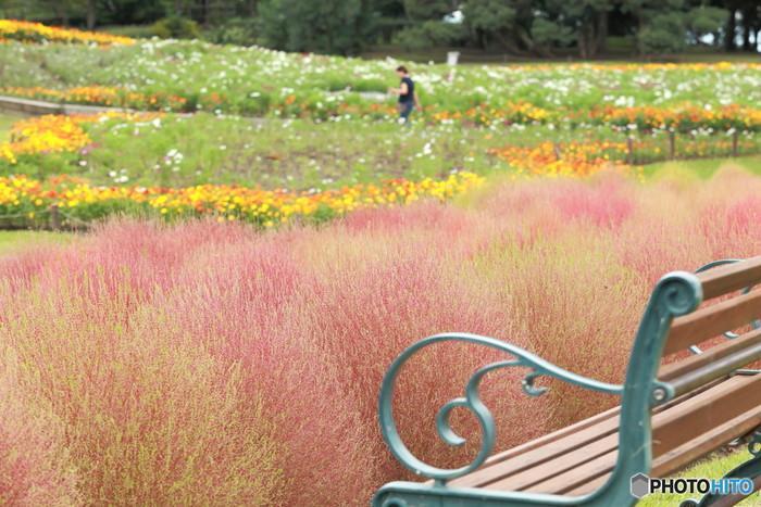 四季折々の花とコキア846373