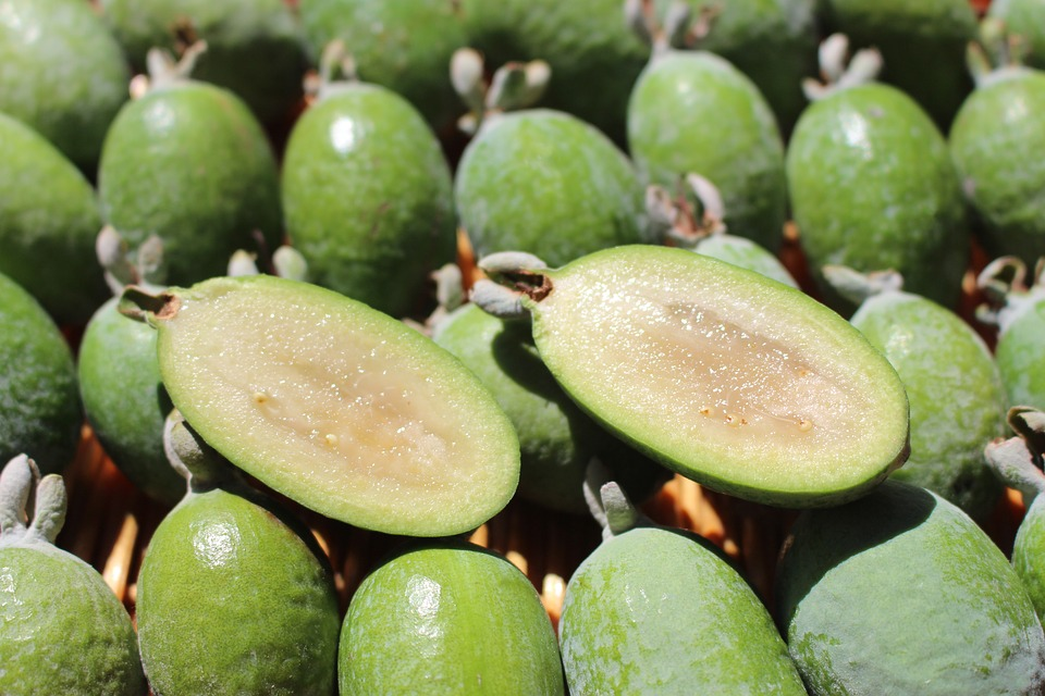 Types of Guava