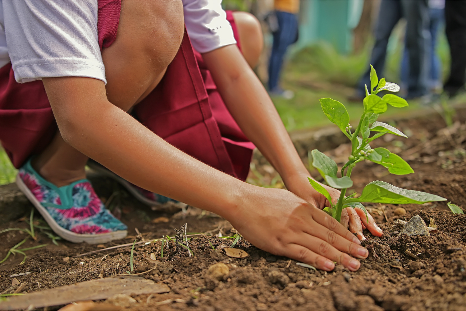 Plant a tree this world environment day