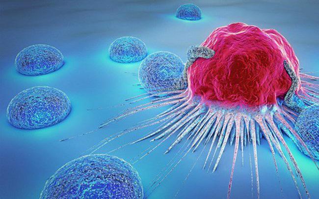 Những loại cây nào có khả năng chữa bệnh ung thư? - Ảnh 1