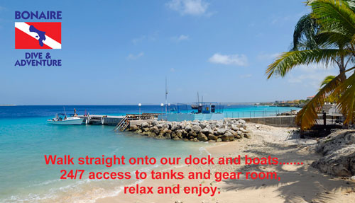 Bonaire Dive and Adventure.jpg